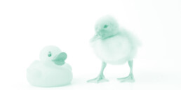 duckling and rubber duck